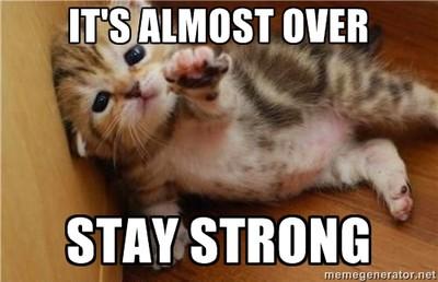kitten stay strong meme