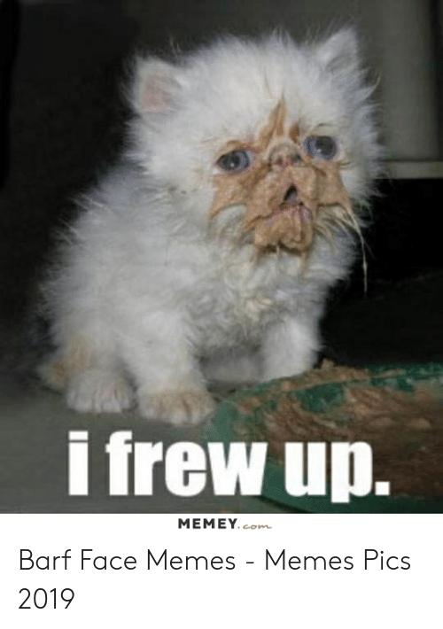 kitten frew up meme