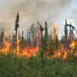 burning boreal forest
