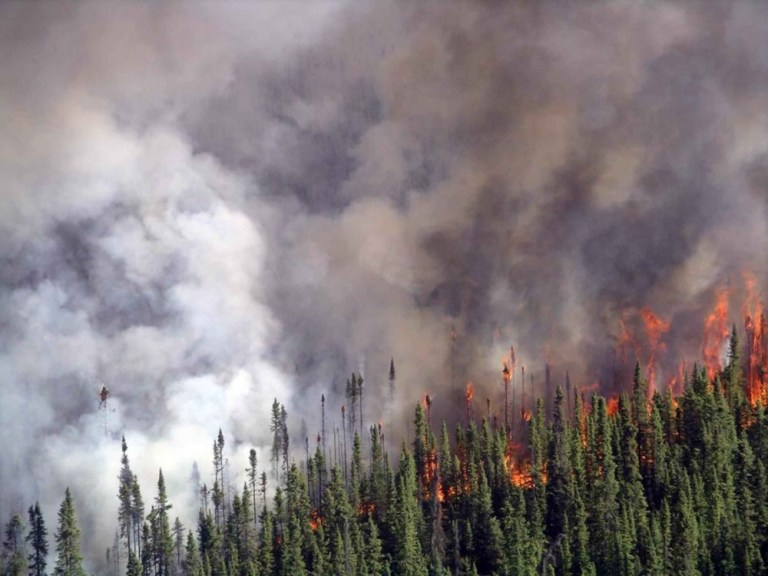 Position Opening: Postdoctoral Researcher in Boreal Wildfire Dynamics
