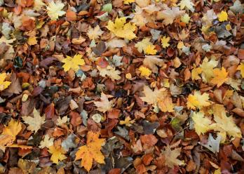 fall-leaves