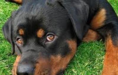 Le chien (www.akeza.net)