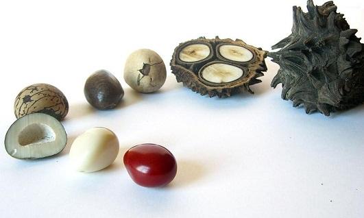 ivoire-végétal-étape