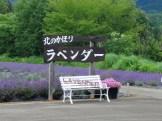 misato_lavender_01