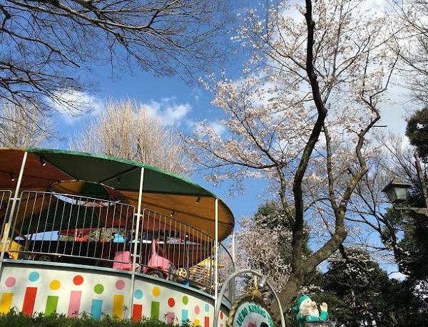 上野公園桜開花