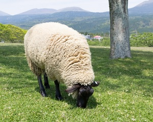 マイクラ羊