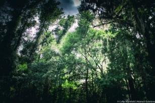 AKiA Landscape-22