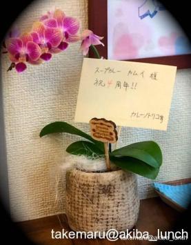 カレーノトリコさんから4周年祝いの蘭が☆
