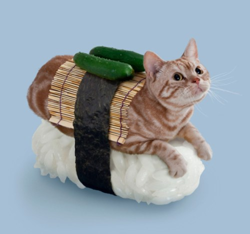 when-cats-and-sushi-combined-09