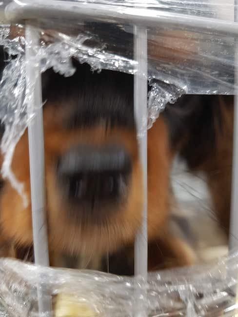 super cute dogs akihikogoto.com