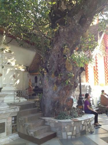 ChiangMaiZoo2011-25