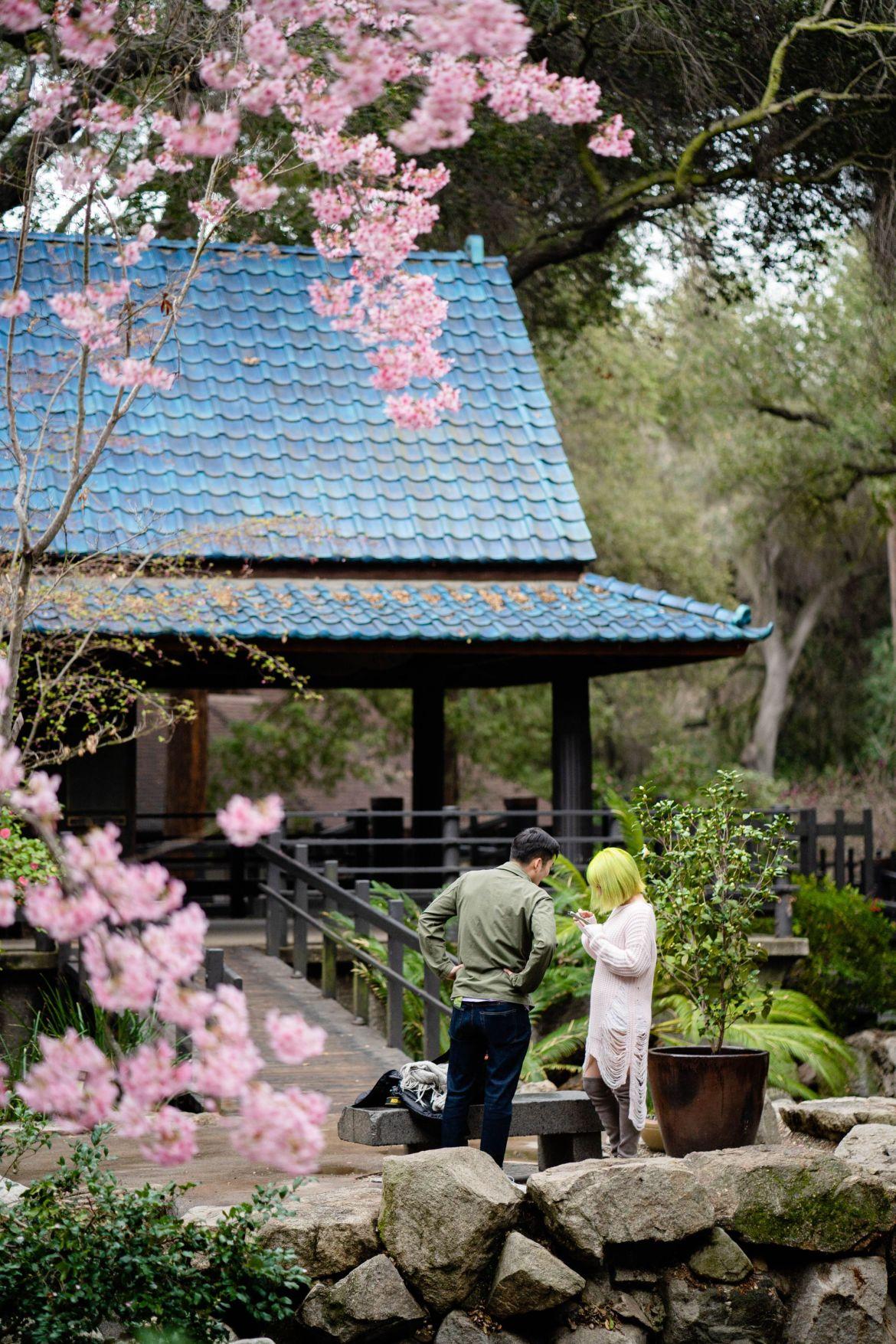 descanso garden sakura