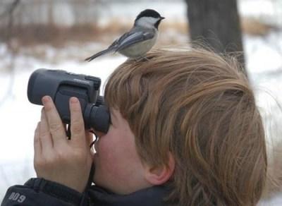 fail-birdwatching