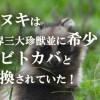 タヌキは世界三大珍獣並に希少!?コビトカバと交換されていた!