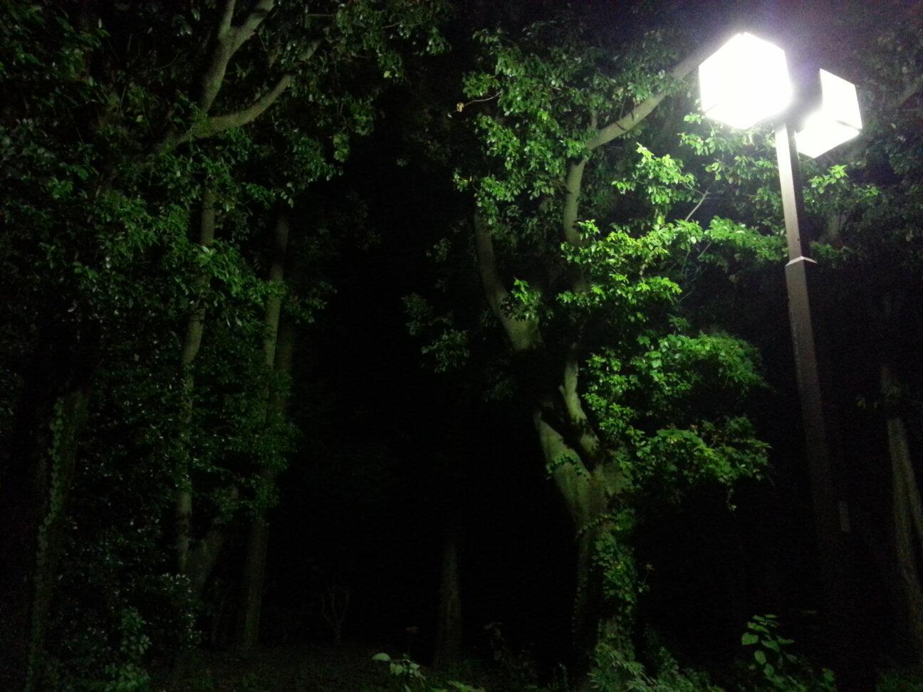 Galaxy S III αで撮った写真(夜の公園)