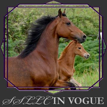 SSLLC In Vogue