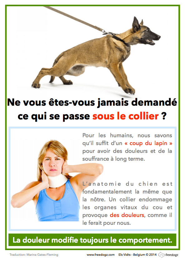 harnais-collier-chiot-chien