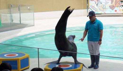 【広島旅行】宮島水族館(みやじマリン)でアシカやアザラシに癒されてきた