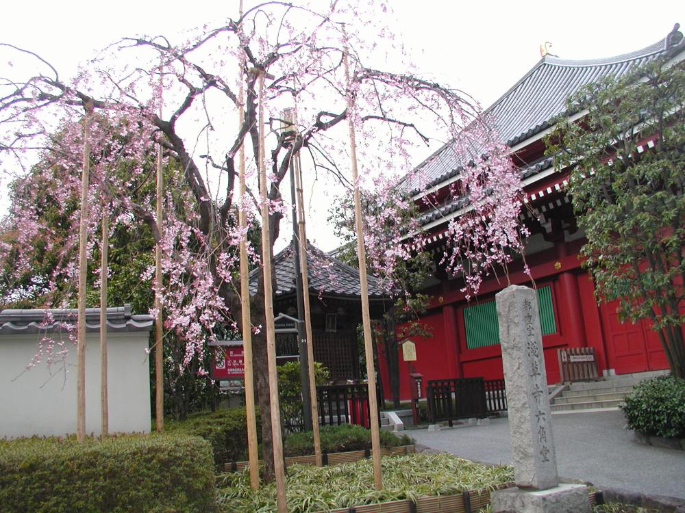 Basho's cherry blossoms (2/2)