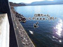 富士周辺アタック白鳥ちゃん01