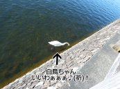 富士周辺アタック白鳥ちゃん05