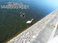 富士周辺アタック白鳥ちゃん07