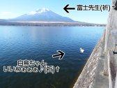 富士周辺アタック白鳥ちゃん11
