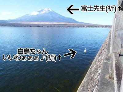 富士周辺アタック白鳥ちゃん12