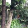 (交渉中)【賃貸】1万円 熊本県上益城郡御船町大字田代 自然豊かな谷川沿いの静かな集落 庭・物置付き平屋