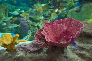 Ripley's Aquarium of Canada