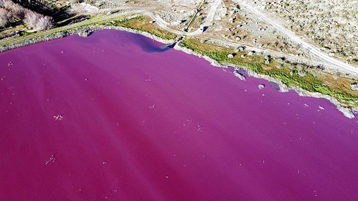 Pink Pollution in Argentina