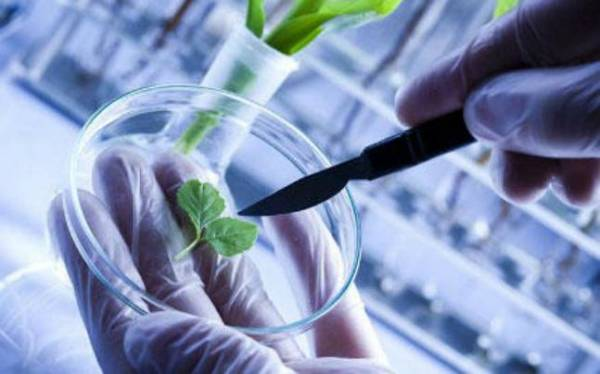 Biotechnology as a career: Bio science and engineering ...