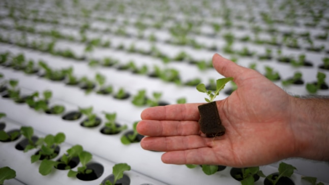 Singapore ramps up rooftop farming plans as coronavirus upends supply chains