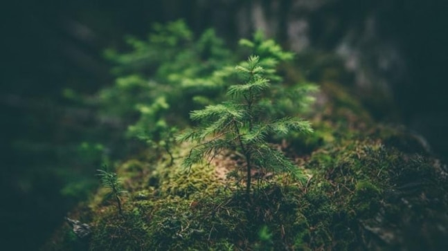 World Environment Day 2021: Quotes that inspire you to conserve earth's habitat