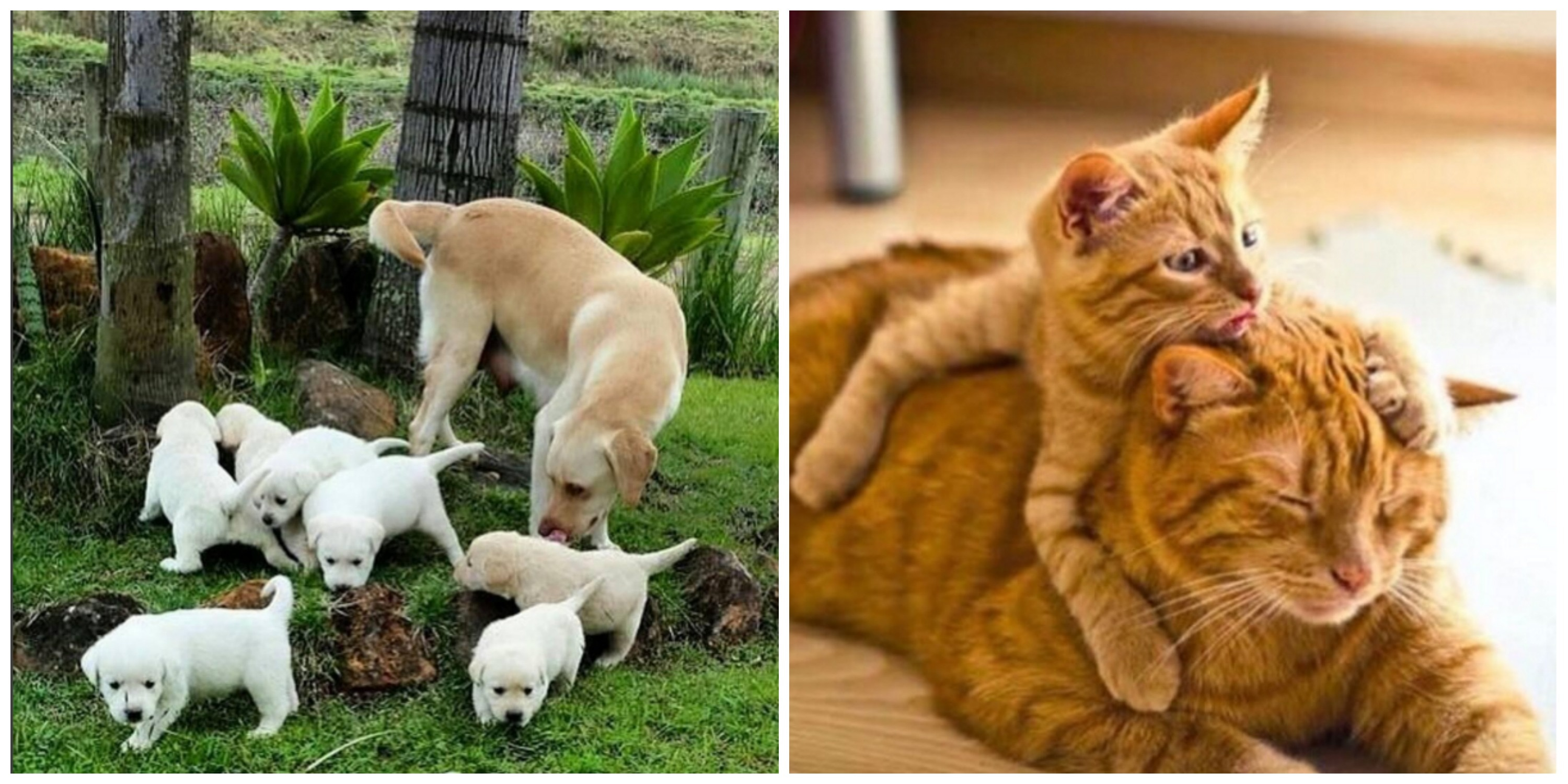 12 Pictures Of Animals With Their Babies That Will Melt