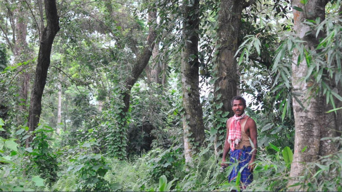 While the sandbar was never a lush green landscape to speak of, its condition had severely. Extraordinary Indians How Forest Man Of India Jadav Payeng Singlehandedly Turned Fallow Land Into A Thriving Biome In Majuli Assam