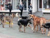 Vijeće roditelja Kantona Sarajevo: Djeca i njihovo zdravlje važniji od pasa lutalica