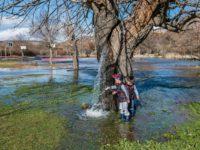 Rijedak prirodni fenomen: Stablo murve (duda) iz kojeg izvire voda