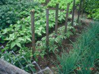 Vrtlarski radovi u maju