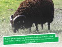 IZ BiH je 2017. godine otkupila više od 8000 kurbana od 200 povratničkih porodica