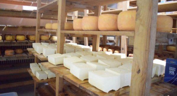 ZlatnaKap-tešanjski sir