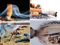 Naučna istraživanja: Opušci cigareta najveći su onečišćivači okoliša