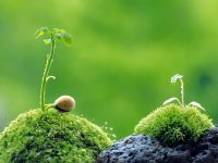 Ekološko vrtlarstvo: Biološki preparati za zaštitu i jačanje bilja koje možete napraviti sami