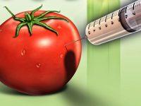 60% hrane koju jedemo je genetski modificirano