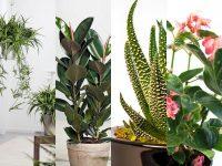 Otrovne biljke naših domova i okućnica