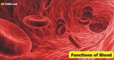 Function of Blood