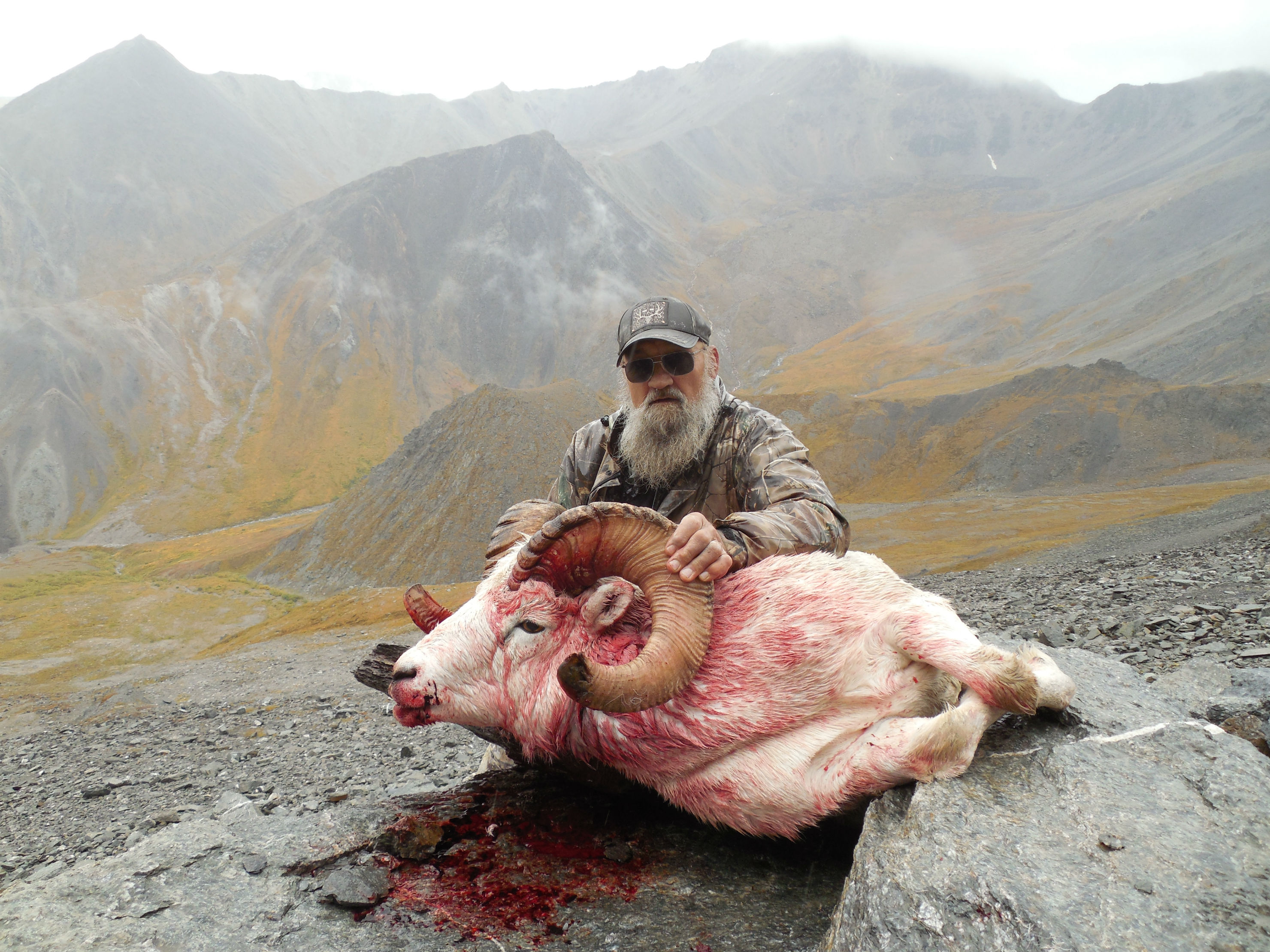 Alaska Range Dall Sheep 2016 Rampage Alaska