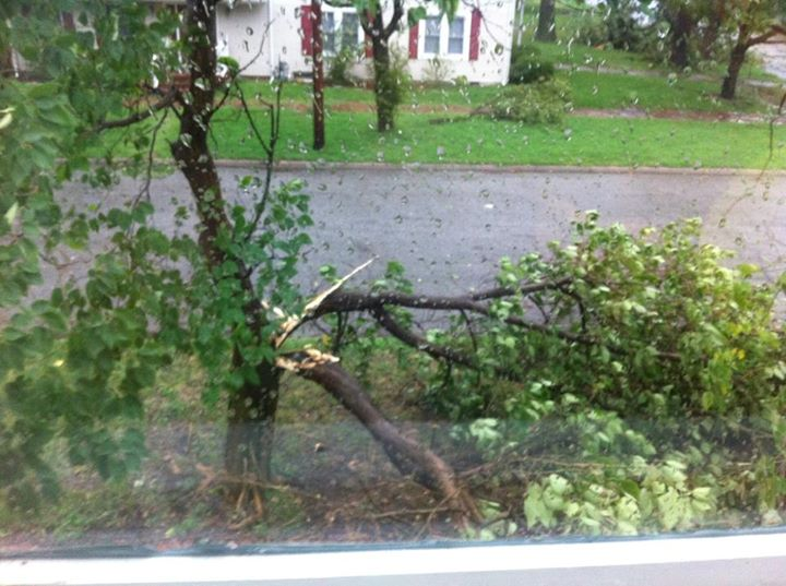 Trees as they came down