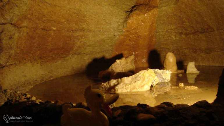Bluff Dweller's Cavern Duck