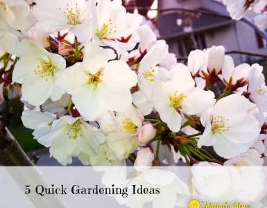 5 Quick Garden Ideas